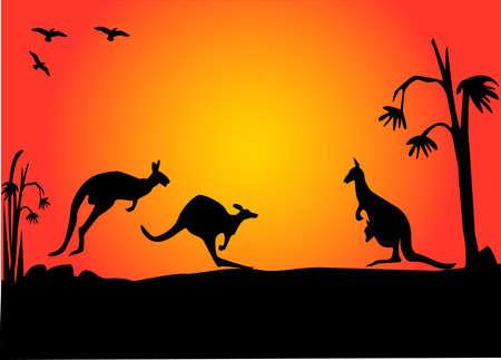 australian outback: canguros australianos tres saltos en la puesta de sol