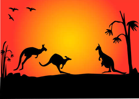 aussie: three australian kangaroos hopping in the sunset