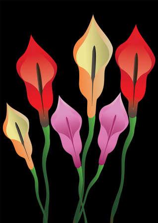 arum flower: A bunch of Arum Flower On Black background Illustration