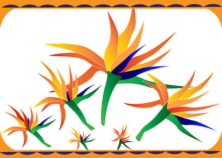 a bright tropical bird of paradise flower Vector