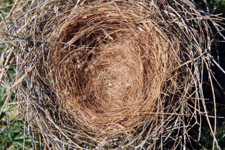 an lonely empty brown straw birds nest photo