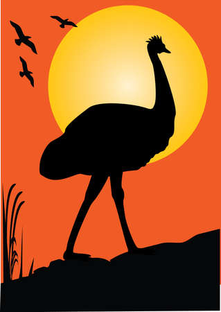 emu: one emu as a  silhouette orange background