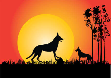 australia landscape: two dingo in the sunset trees and grass