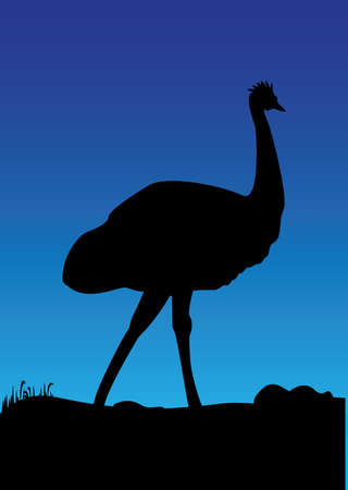 emu: a emu blue background Illustration