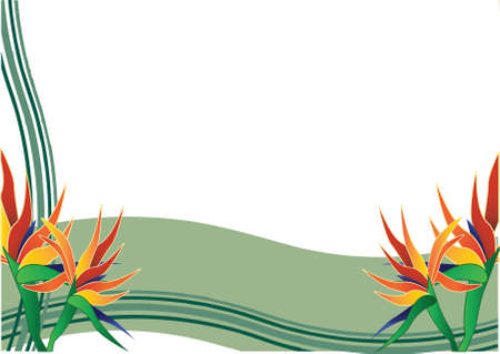 birds of paradise: bird of paradise  with green background Illustration
