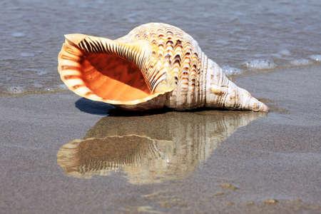 shell on the beach photo