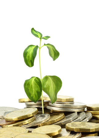 a pile of coins with a plant  on a white background photo