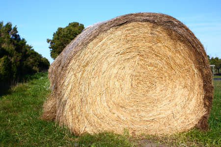 a large bale of hay on the grass Stock Photo - 7678843