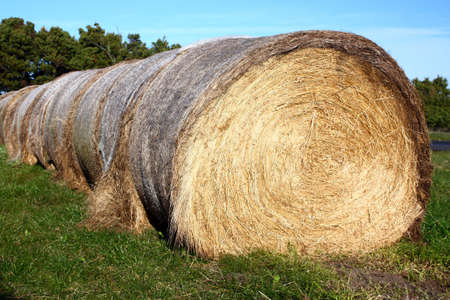 a large  bale of hay and green grass Stock Photo - 7678846