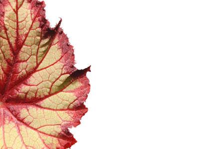 bright leaf ona white background photo