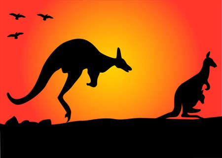 aussie: two australian kangaroo hopping in the sunset