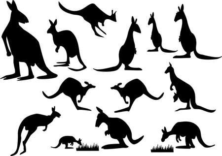 un set di canguro silhouette su sfondo bianco Vettoriali