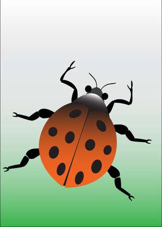 lady beetle: a  orange lady beetle on green background