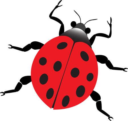 lady beetle: red lady beetle Illustration
