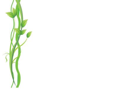 une plante verte et les vignes sur fond blanc