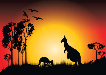 sunset with two kangaroos and joey in the bush Vector