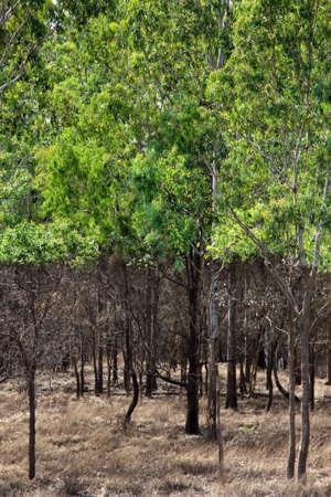 qld: flood damage trees Rockhampton QLD Australia