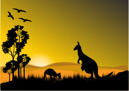kangaroos feeding in the late afternoon sunset  Vector