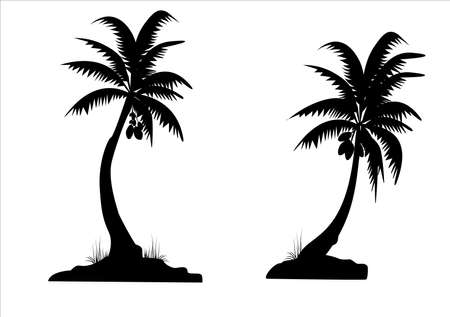 coconut palm: two black palm trees on white background