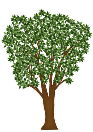 tree with green leaves on a white background