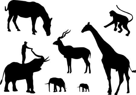 large group of animals: silhouette of african animals on white background