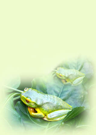 treefrog: note pad with two green frogs on it
