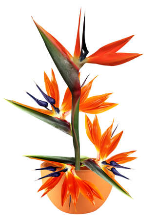 bird of paradise: floral arrangement of flower in a clay pot