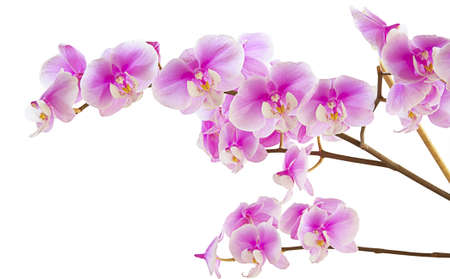 purple orchid: a bunch of beautiful purple orchids Stock Photo