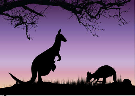 two kangaroo purple background with tree and grall Vector
