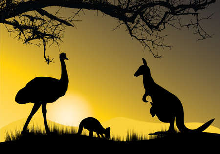kangaroo in the sunset photo