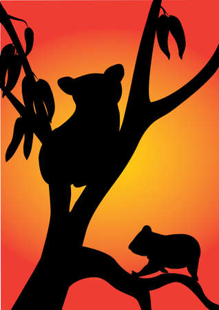 two koala in a tree with sunset background Vector