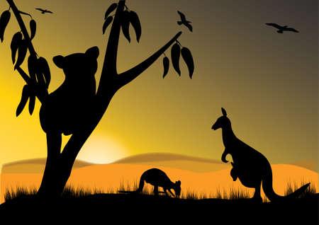 koalabeer: enkele koala twee kangoeroe en joey in de zonsondergang