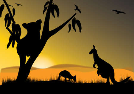 australian outback: single koala two kangaroo and joey in the sunset