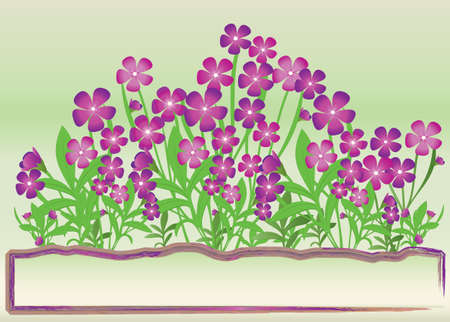 bunch of purple flowers on green background Vector