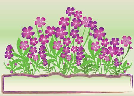 garden design: bunch of purple flowers on green background