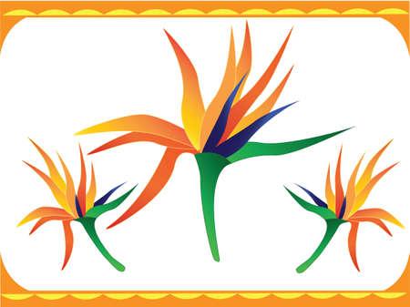 bird of paradise: a bright tropical bird of paradise flower