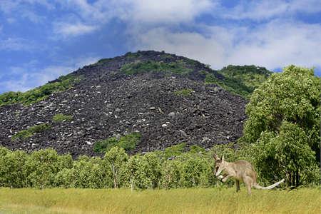 Las Montañas Negras misteriosas están inmersos en los mitos y leyendas, el lugar para la gente Kuku Yalanji Foto de archivo - 13650680