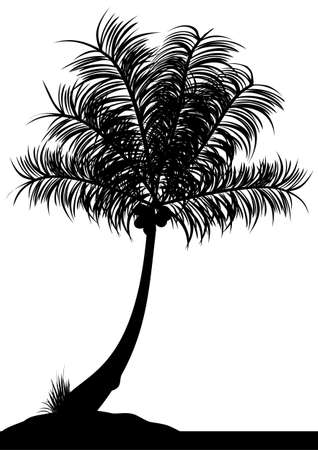 coconut tree: a single coconut tree on a white background Illustration