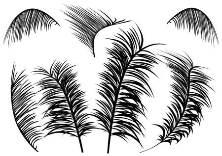 fronds: a set of silhouette palm leaves on a white background Illustration