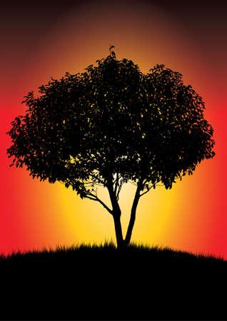 lonely tree: single black tree in a bright orange  sunset