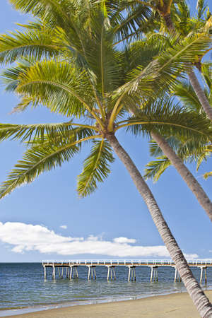 Australia  beach scene of jetty with coconut trees Stock Photo - 15215082