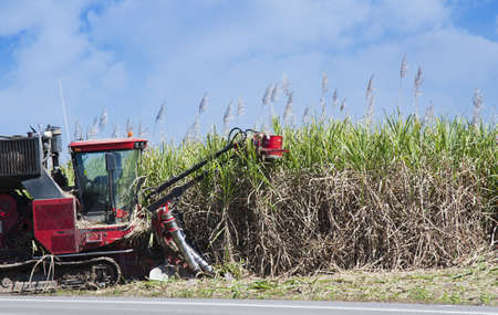 sugarcane: a red cane harvester cutting sugar cane