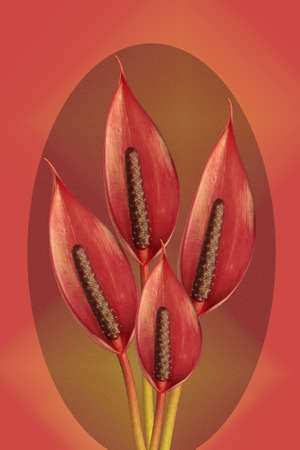 anthurium: bunch of anthurium  flowers on oval background