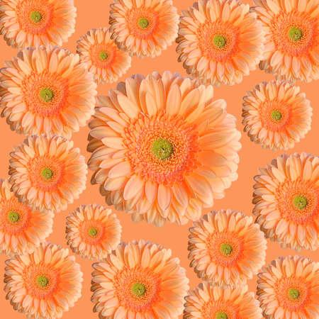 lots of gerbra on an orange background photo