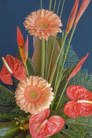 anthurium: bouquet of flowers with two gerbra and lillies Stock Photo