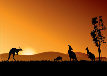 four kangaroos feeding in the bright sunset Vector