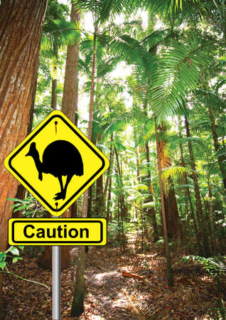 cassowary sign in the rainforest  photo
