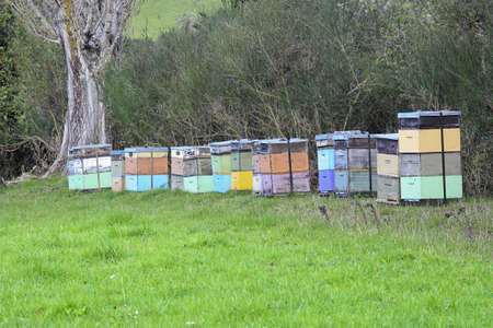 bee hives in the country of New Zealand photo