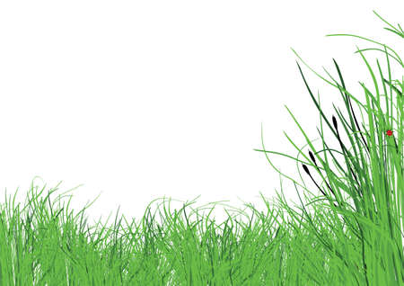 lots of lush grass with a white