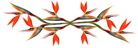 bloom bird of paradise:  eight bird of paradise flowers joined and mirrored together